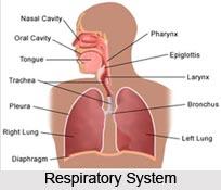Respiration in Pranayama