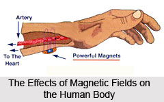 Affect of magnets in Human Metabolism