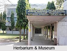 Herbarium & Museum, Chandigarh