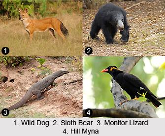 Mahandadi Wildlife Division, Orissa