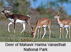 Mahavir Harina Vanasthali National Park, Hyderabad, Telangana