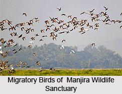 Manjira Wildlife Sanctuary, Andhra Pradesh