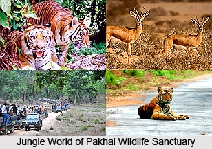 Pakhal Wildlife Sanctuary, Warangal District, Telangana