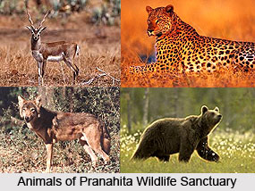 Pranahita Wildlife Sanctuary, Adilabad District, Telangana