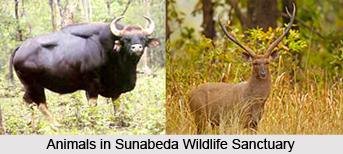 Sunabeda Wildlife Sanctuary, Orissa