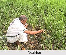 Festivals of Kalahandi, Odisha