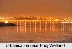Bhoj Wetland, Bhopal, Madhya Pradesh