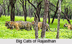 Flora and Fauna of Rajasthan