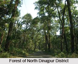 Forestry in North Dinajpur District