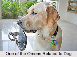Omens Related to a Dog, Vastu Shastra