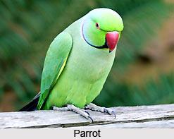 Omens Related to Birds, Vastu Shastra