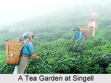 Singell, Kurseong, West Bengal