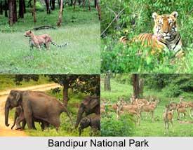 Bandipur National Park ,Karnataka