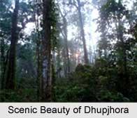 Dhupjhora, Dooars, West Bengal
