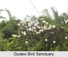 Gudavi Bird Sanctuary,Wildlife,Karnataka