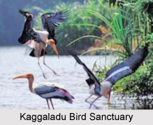 Kaggaladu Bird Sanctuary, Karnataka