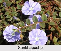 Sankhapushpi, Indian Medicinal Plant