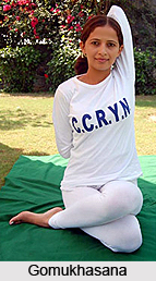 Asanas in Hatha Yoga
