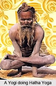 Impact of Hatha Yoga on Body Cells, Human Body and Hatha Yoga