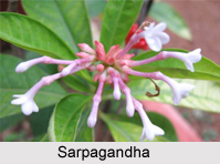 Flora And Fauna Of Uttar Pradesh