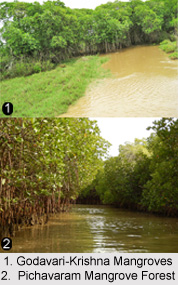 Mangrove in India