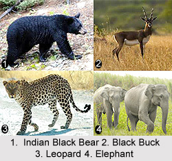 Wild Animals in India