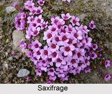 Flora Of Uttarakhand