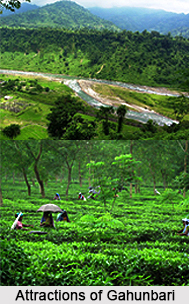 Gahunbari, Dooars, West Bengal