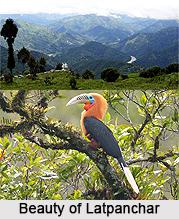 Latpanchar, Darjeeling, West Bengal