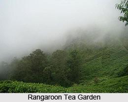Rangaroon, Darjeeling, West Bengal