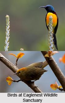 Eaglenest Wildlife Sanctuary, West Kameng District, Arunachal Pradesh