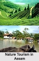 Nature Tourism in Assam
