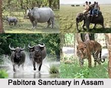 Pabitora Sanctuary, Assam