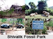 Shivalik Fossil Park, Himachal Pradesh