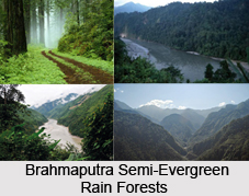 Forests in Eastern India