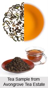 Avongrove Tea Estate
