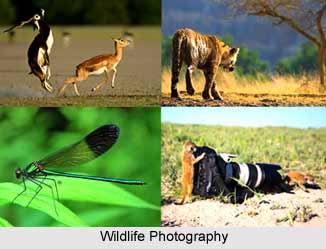 Wildlife Photography in India