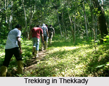 Thekkady , Idukki