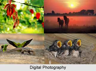 Digital Photography  in India