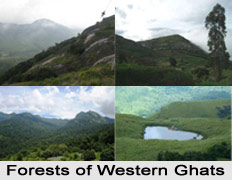Forest Vegetation in West India